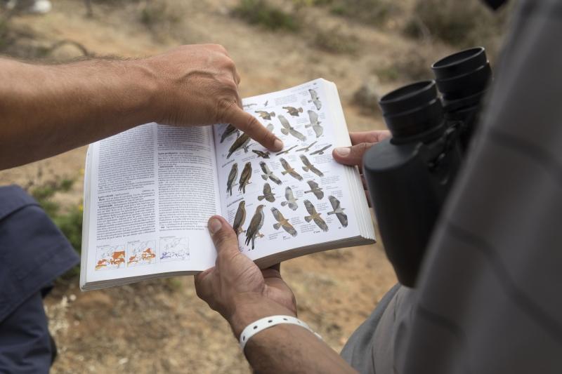 Livro de aves