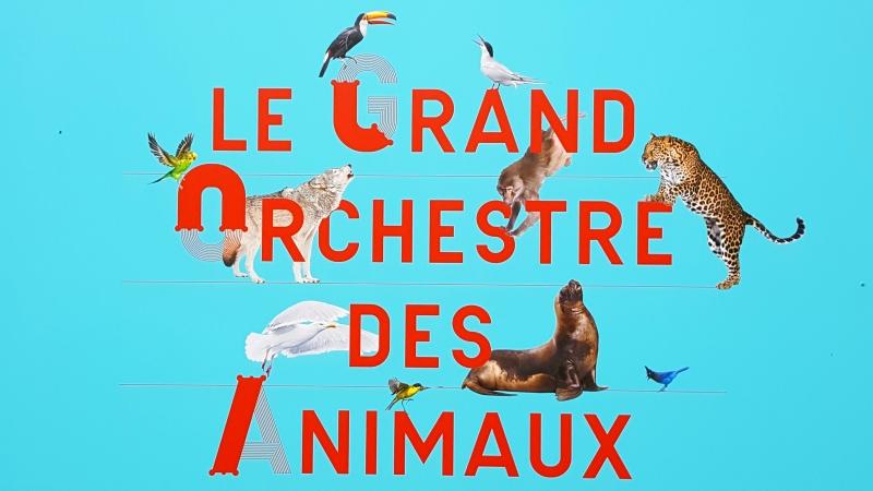 A Grande Orquestra dos Animais – Bernie Krause