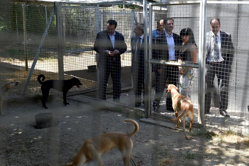 Braga alarga Centro de Recolha de Animais e introduz esterilização