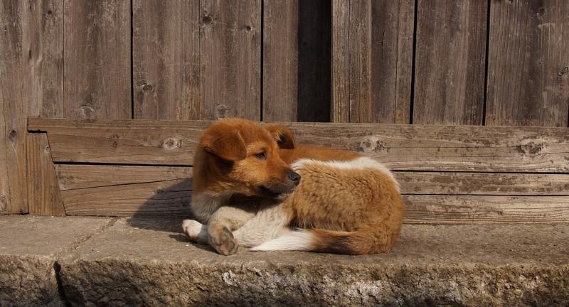 Holanda, um país sem cães abandonados
