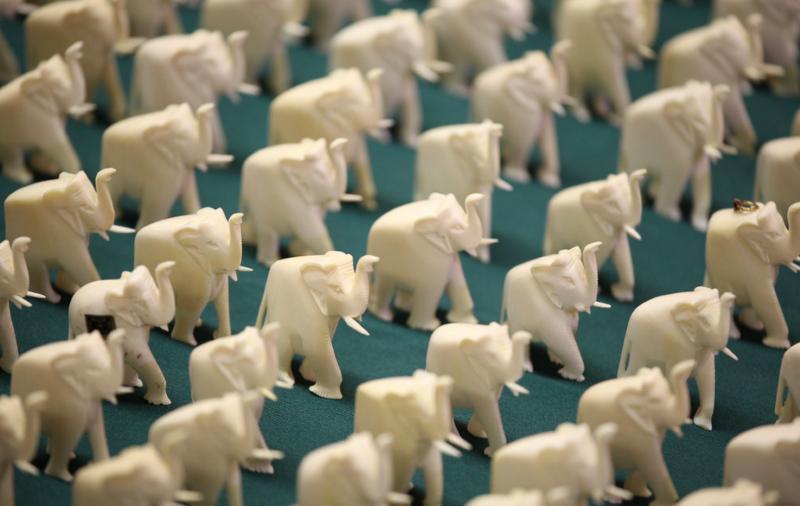 Califórnia Proíbe Comércio de Marfim