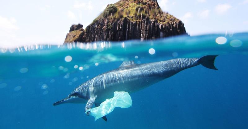 Mais Plásticos do que Peixes no Oceano até 2050