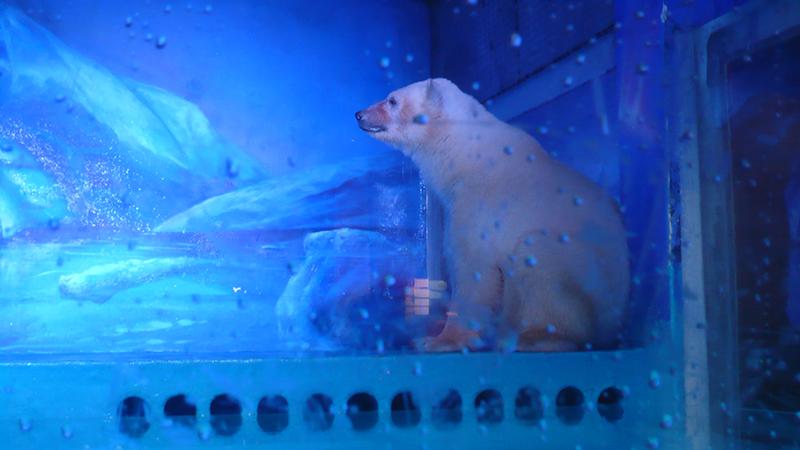 O urso polar que vive num centro comercial da China para tirarem 'selfies'