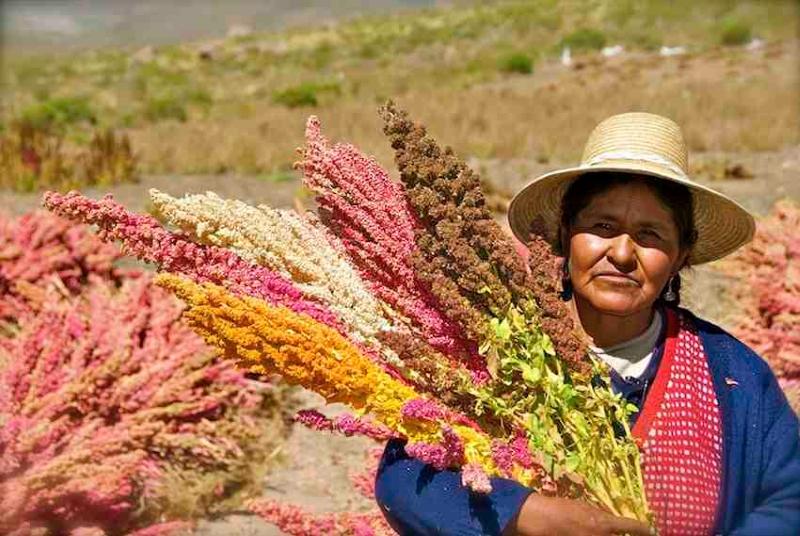 Bolívia investe em agricultores para atingir auto-suficiência alimentar até 2020