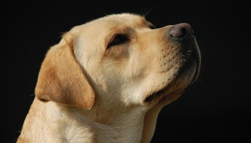 Cão ajuda rapaz perdido em serra mexicana a sobreviver