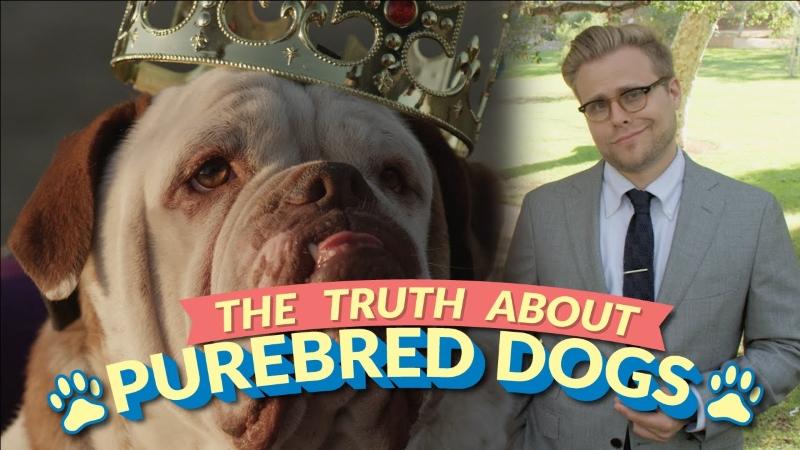 A bizarra verdade sobre os cães de raça e porque os rafeiros são melhores [vídeo]