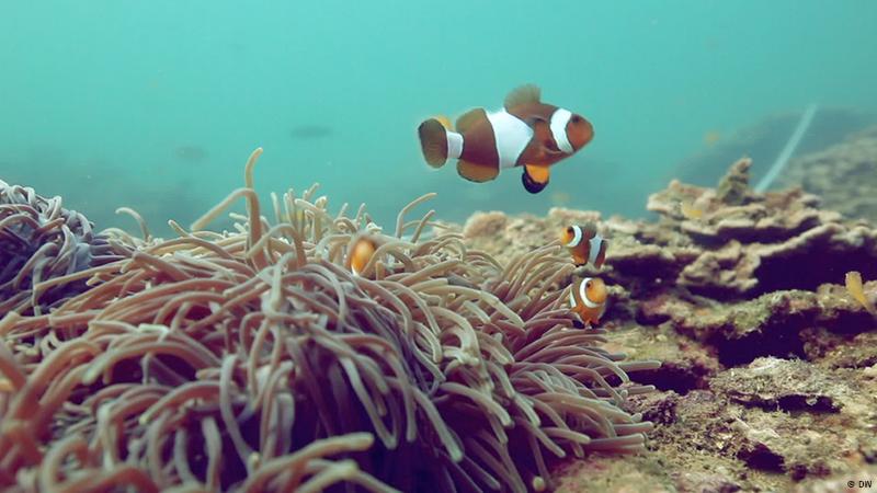 """Pesca com dinamite destrói e cria """"cemitérios de corais"""" em Myanmar"""