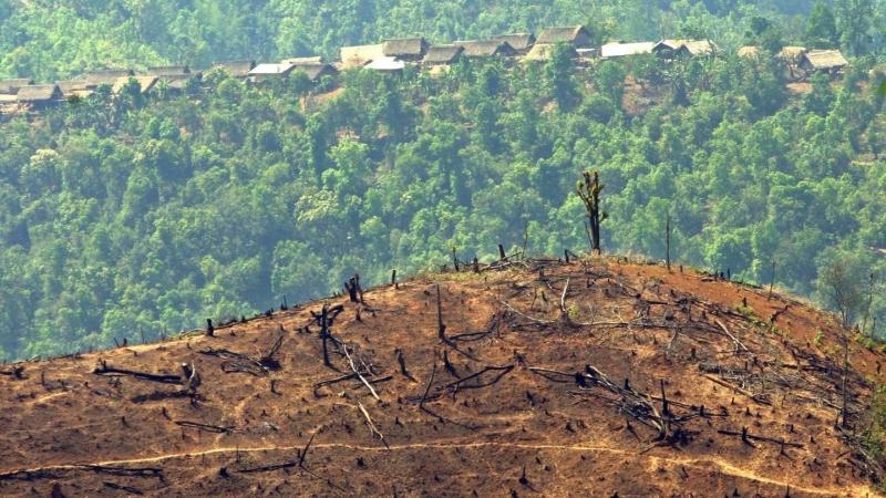 Myanmar anula proibição do abate de árvores e quer produzir 365 mil toneladas de madeira