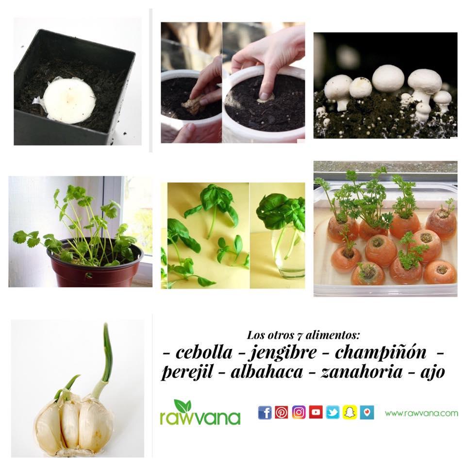 7 alimentos que voltam a crescer