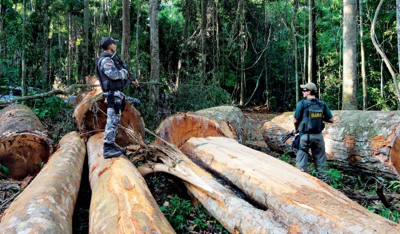 Caça, desflorestação e mineração ilegais valem até €230 mil milhões por ano