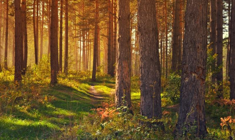 Árvores falam entre si e reconhecem a sua descendência
