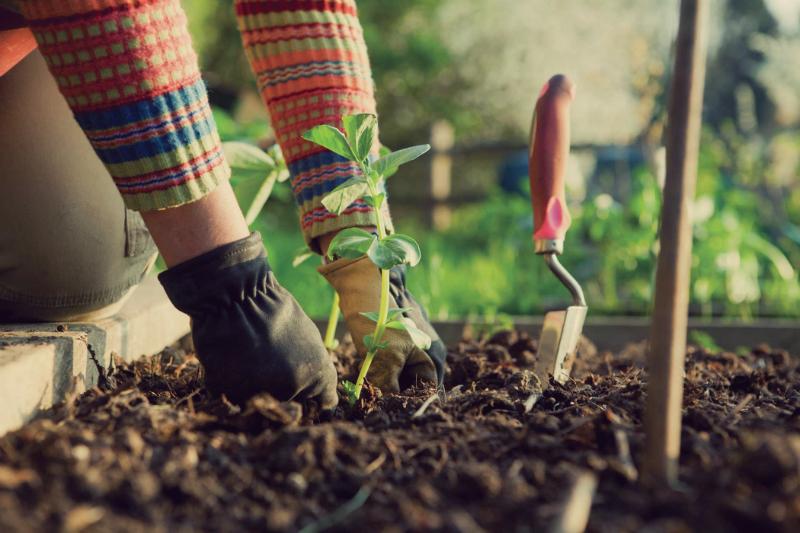 Médicos Deviam Prescrever Jardinagem aos Pacientes, Diz Estudo