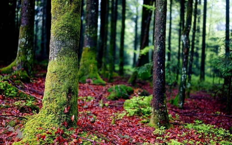"""Árvores criam laços especiais com """"amigos e família"""" e cuidam umas das outras"""