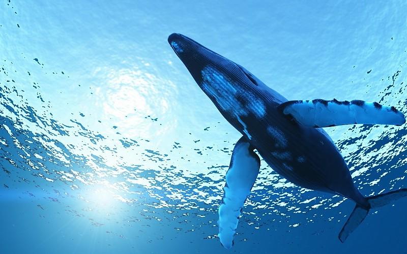 """Humanidade está a causar extinção de vida marinha """"sem precedentes"""""""