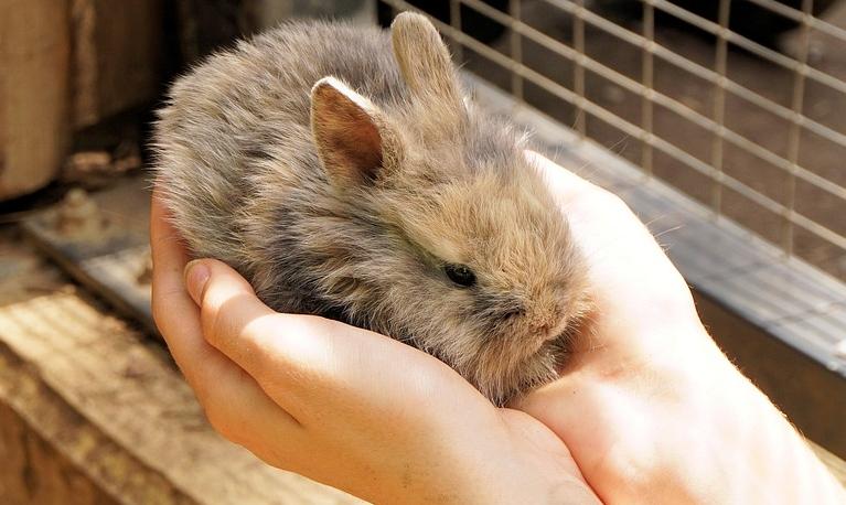 Holanda vai acabar com testes de laboratório em animais