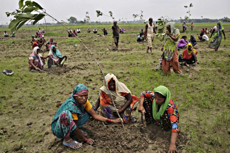Indianos plantam milhões de árvores