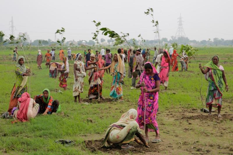 Índia – 49,3 milhões de árvores plantadas num só dia