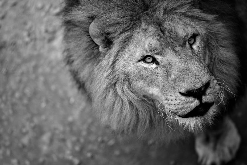 As 7 grandes decisões da reunião sobre vida selvagem da CITES