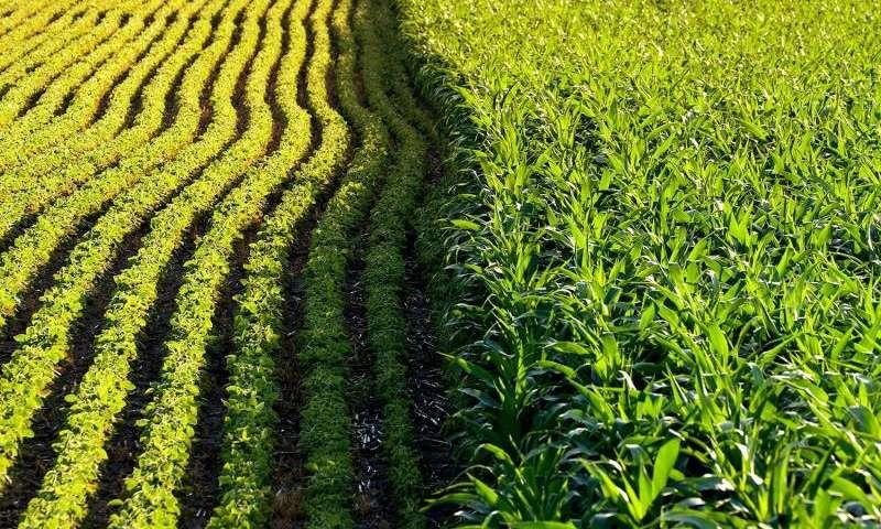 Estudo revela impacto ambiental de culturas geneticamente modificadas
