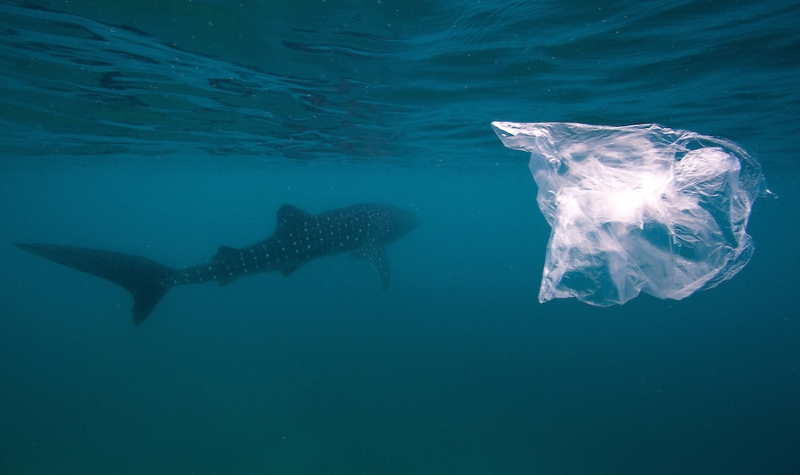Até as criaturas do fundo do mar já estão a comer plástico, avisa estudo