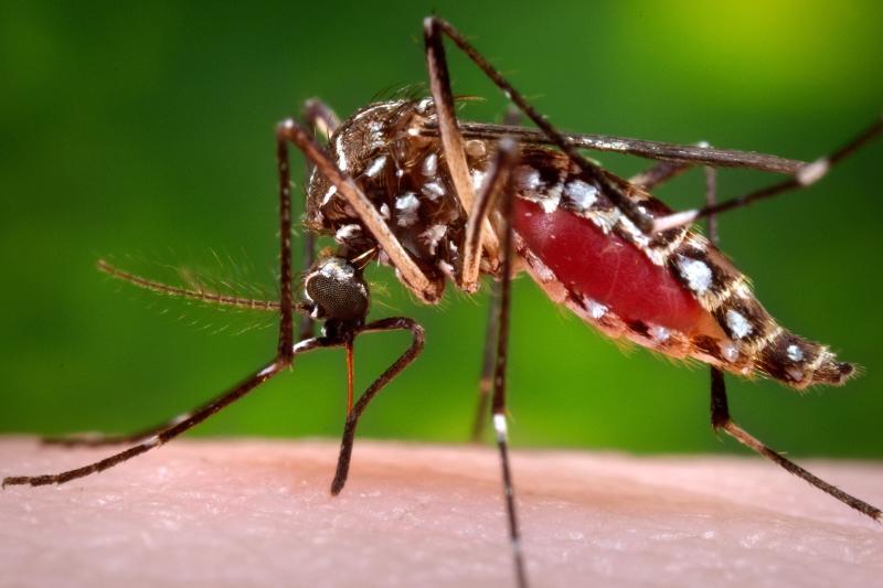 Abriu a 2ª fábrica de mosquitos transgénicos contra o dengue no Brasil