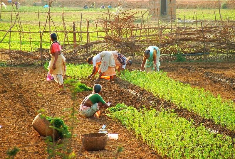 Goa: Governo lança programa para impulsionar agricultura biológica