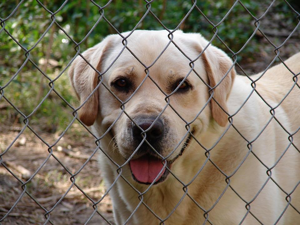 Governo aceita proposta do PAN e dá 1 milhão para canis municipais