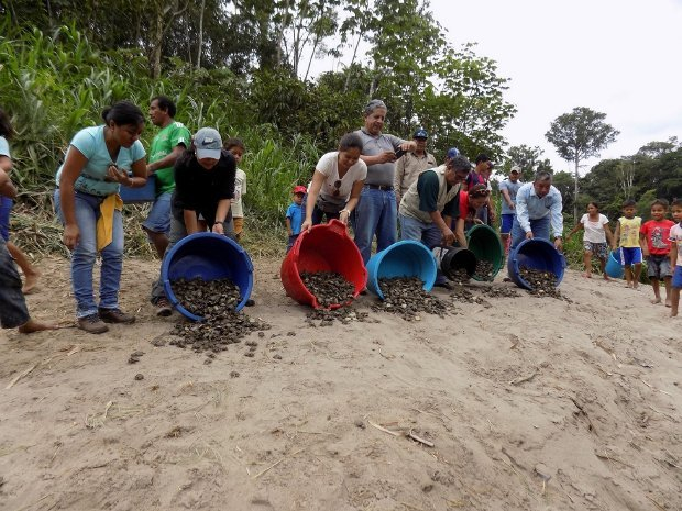 Peru vai libertar meio milhão de crias de tartaruga na Amazónia