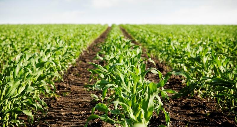 Microplásticos também estão nos solos agrícolas – motivo para preocupação?