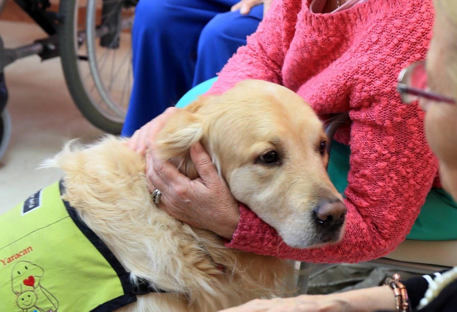 Hospital espanhol reduz 60% da medicação para depressão com terapia com cães