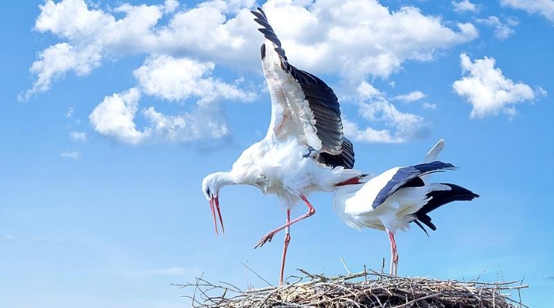 Comissão Europeia diz não à revisão da Diretiva das Aves e Habitats