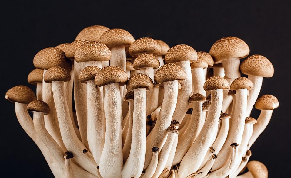 Fungos usados para produzir um substituto ecológico ao esferovite