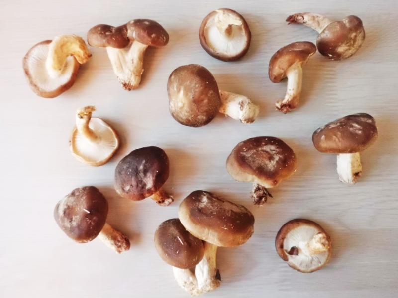 Produtos experimentados: Cogumelos shiitake biológicos – Cogumelos do Migaas