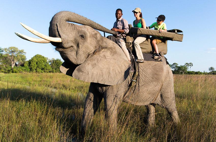 Andar de elefante está agora oficialmente proibido no Botswana