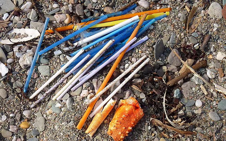 A cotonete que deita na sanita vai parar ao mar, é comida por peixes e acaba no seu prato