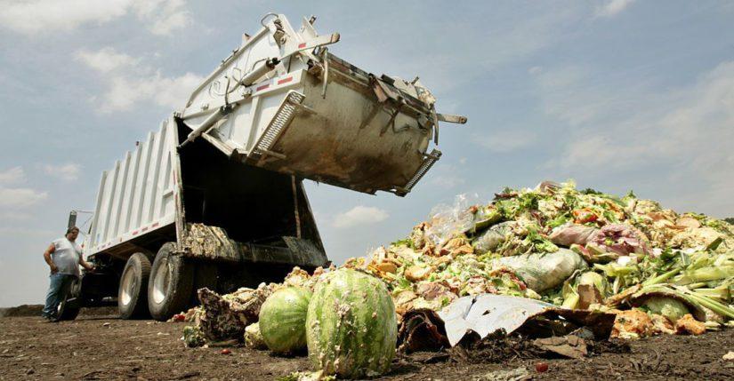 Para produzir os alimentos desperdiçados desflorestam-se 15 milhões de ha por ano