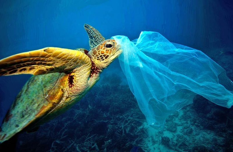 Os animais que estão a ser afetados pelos nossos sacos de plástico