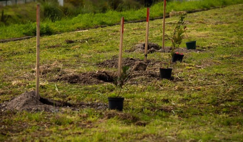 Começou a ser plantado o primeiro bosque urbano do Porto