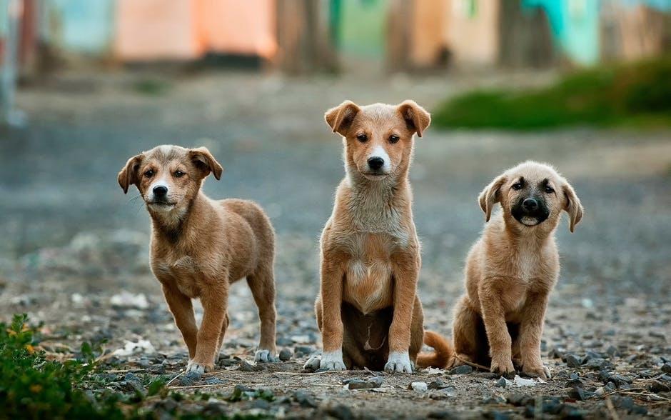 Taiwan proíbe o abate de cães e gatos vadios