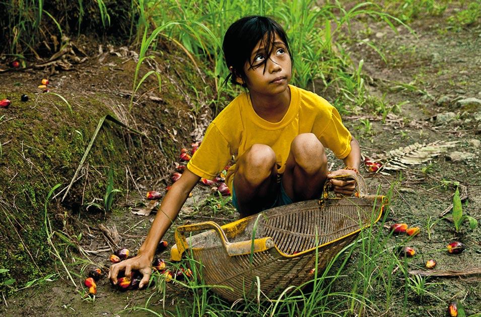 Crianças trabalham sob condições perigosas para produzir o óleo de palma da Nestlé, Kellogg's e Unilever