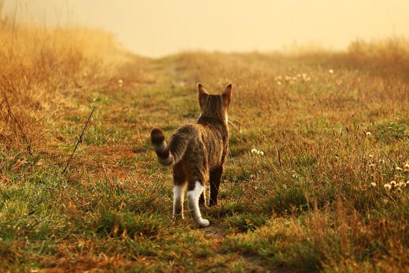 Não havia gatos na Austrália, mas agora eles ocupam 99,8% do seu território