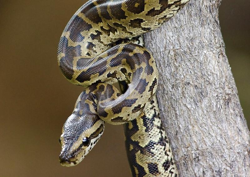 Quénia proíbe a exportação de cobras para zoos e lojas de animais