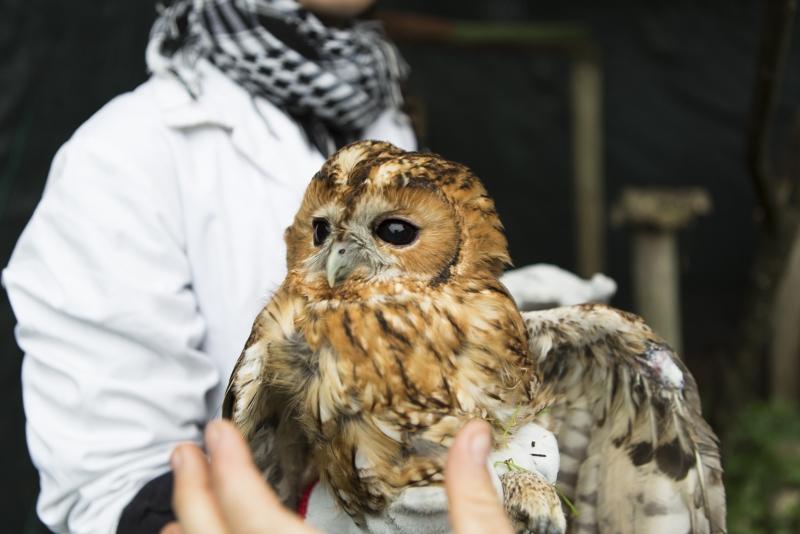 CERAS, o hospital de animais selvagens que devolve os seus pacientes à Natureza