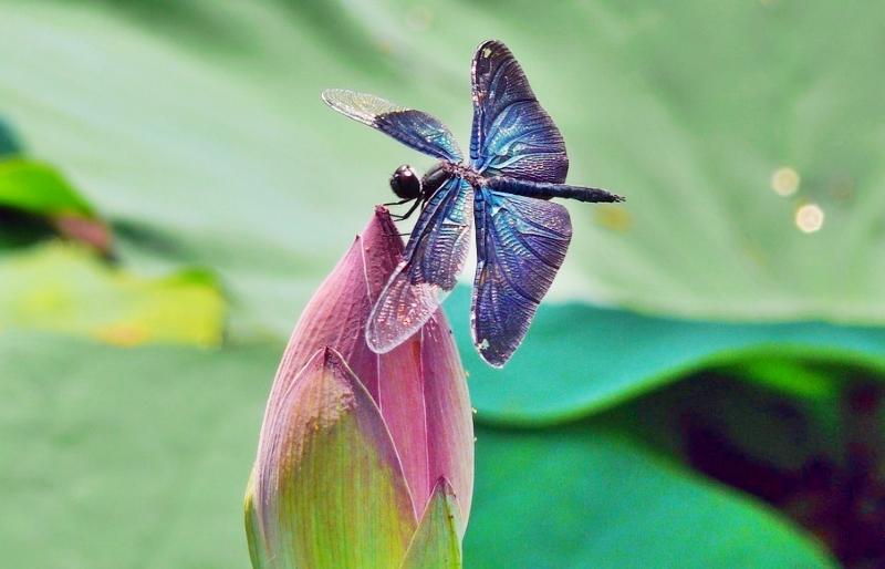 Relatório da ONU reconhece que a biodiversidade é essencial para os direitos humanos