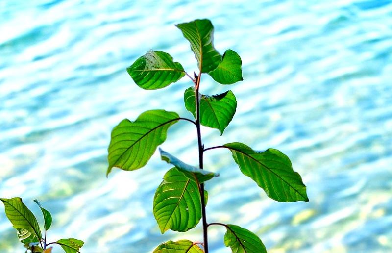 """Cientistas descobrem que plantas """"escutam"""" para encontrar fontes de água"""