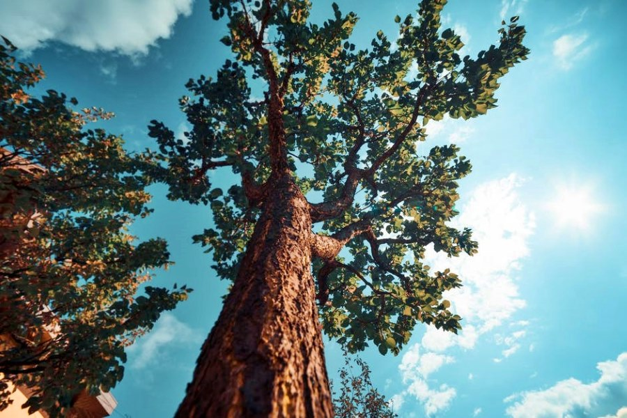 Há mais de 60 000 espécies de árvores no mundo e 10 000 estão em risco de extinção