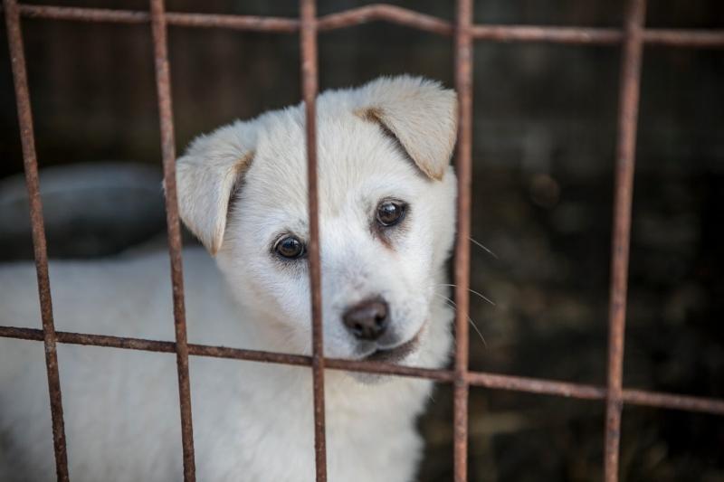 Taiwan proíbe venda e consumo de carne de cão e gato