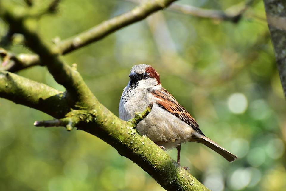 Há menos 400 milhões de aves na Europa do que havia em 1980