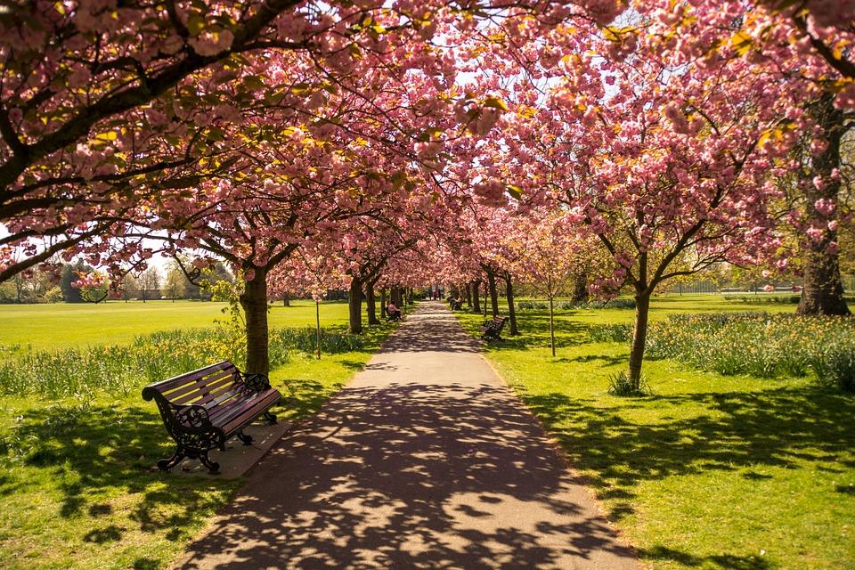 Viver perto de árvores e espaços verdes reduz risco de obesidade e depressão, diz estudo