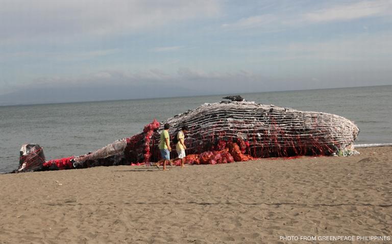 """""""Deu à costa"""" uma baleia de plástico nas Filipinas"""